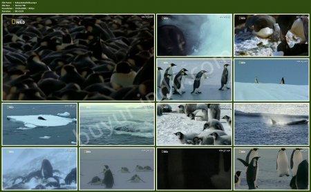Vahşi Antarktika